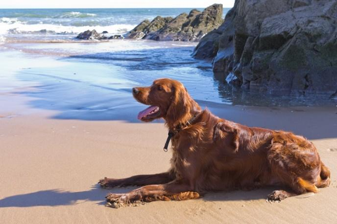 Guest Blog – Page 2 – Not Just Pets